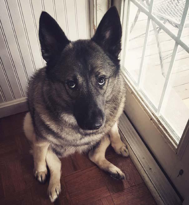 Σκύλοι που φαίνεται να έχουν βραχυκυκλώσει (11)