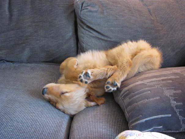 Σκύλοι που φαίνεται να έχουν βραχυκυκλώσει (13)