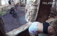 Τα πιο απίστευτα fails με άγρια ζώα