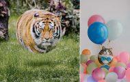 Καλλιτέχνης παρουσιάζει τα ζώα σε... σχήμα μπάλας! (13)