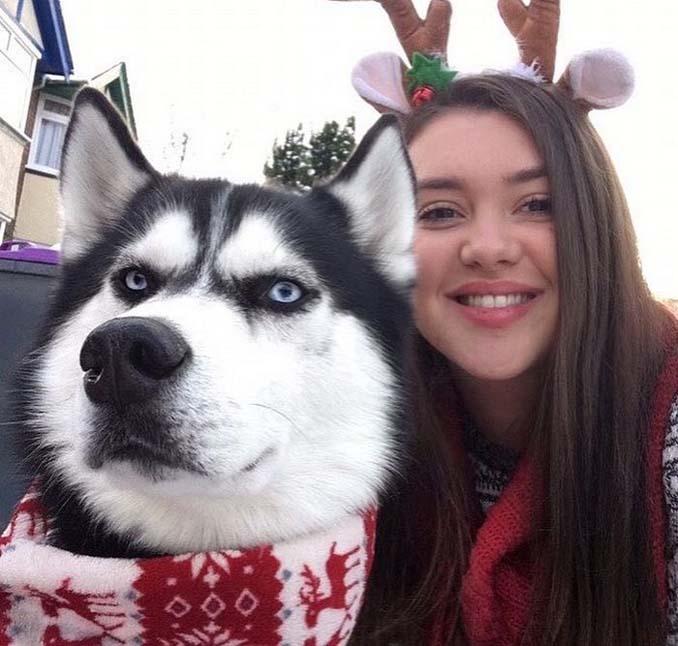 Η χριστουγεννιάτικη φωτογράφιση με το Χάσκι βγήκε ξεκαρδιστικά αποτυχημένη (3)