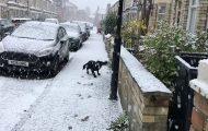 Η απίθανη αντίδραση ενός σκύλου που βγαίνει στο χιόνι για πρώτη φορά