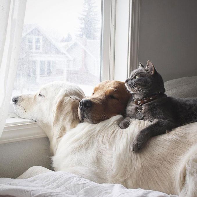 Μια απίθανη παρέα: Δυο σκύλοι και μια γάτα κάνουν τα πάντα μαζί (1)
