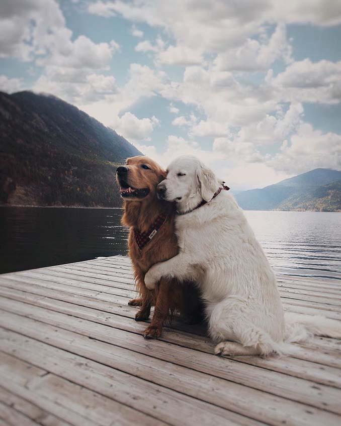 Μια απίθανη παρέα: Δυο σκύλοι και μια γάτα κάνουν τα πάντα μαζί (3)