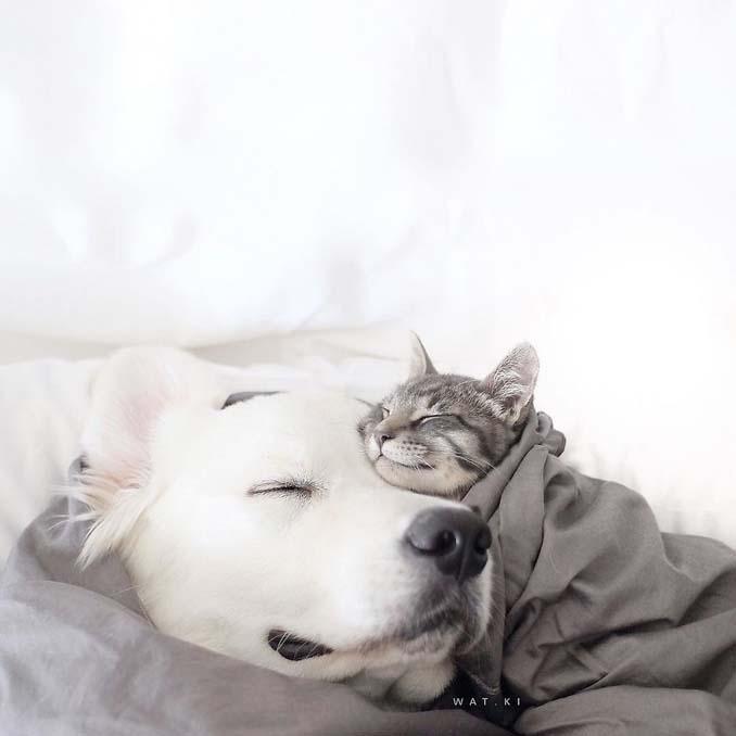 Μια απίθανη παρέα: Δυο σκύλοι και μια γάτα κάνουν τα πάντα μαζί (6)