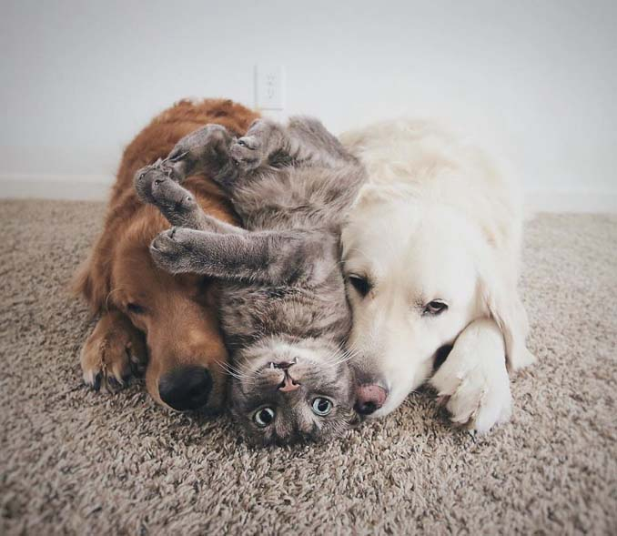 Μια απίθανη παρέα: Δυο σκύλοι και μια γάτα κάνουν τα πάντα μαζί (8)