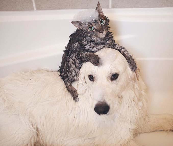 Μια απίθανη παρέα: Δυο σκύλοι και μια γάτα κάνουν τα πάντα μαζί (10)