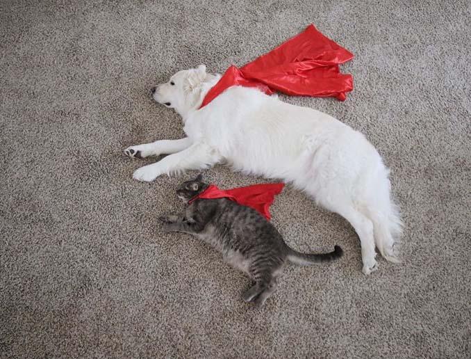 Μια απίθανη παρέα: Δυο σκύλοι και μια γάτα κάνουν τα πάντα μαζί (16)