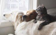 Μια απίθανη παρέα: Δυο σκύλοι και μια γάτα κάνουν τα πάντα μαζί (18)