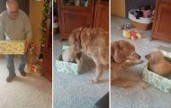 Ενθουσιασμένος σκύλος ανοίγει το χριστουγεννιάτικο δώρο του και βρίσκει μέσα ένα κουτάβι