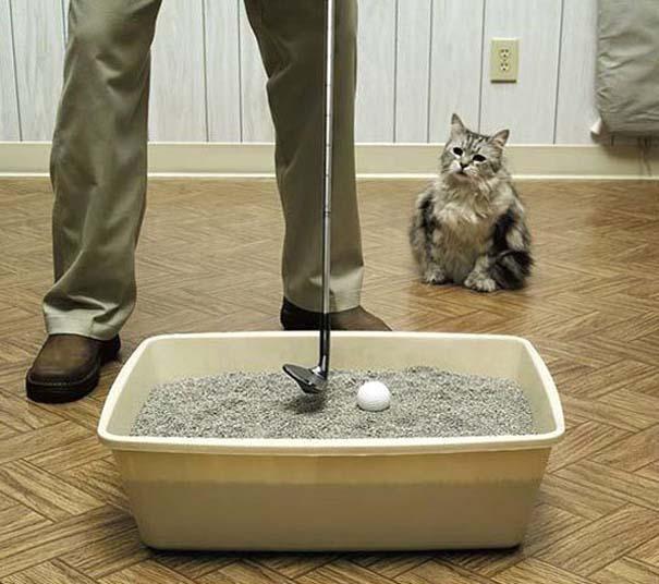Γάτες που... κάνουν τα δικά τους! #74 (6)