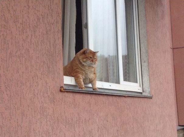 Γάτες που... κάνουν τα δικά τους! #74 (7)