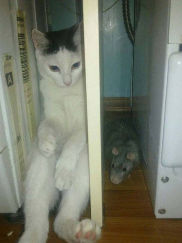 Γάτες που... κάνουν τα δικά τους! #74 (8)
