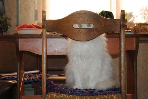 Γάτες που... κάνουν τα δικά τους! #75 (5)