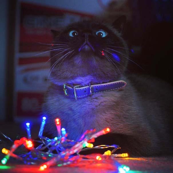 Γάτες που... κάνουν τα δικά τους! #75 (6)