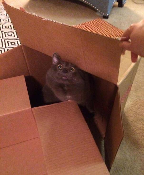 Γάτες που... κάνουν τα δικά τους! #75 (7)