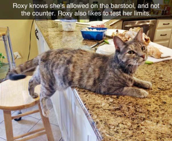 Γάτες που... κάνουν τα δικά τους! #75 (9)