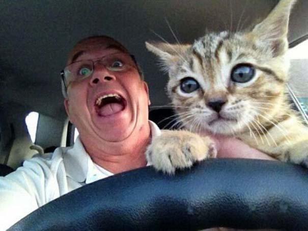 Γάτες που... κάνουν τα δικά τους! #74 (2)