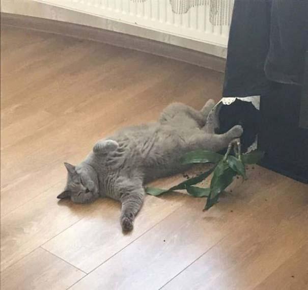 Γάτες που... κάνουν τα δικά τους! #74 (3)
