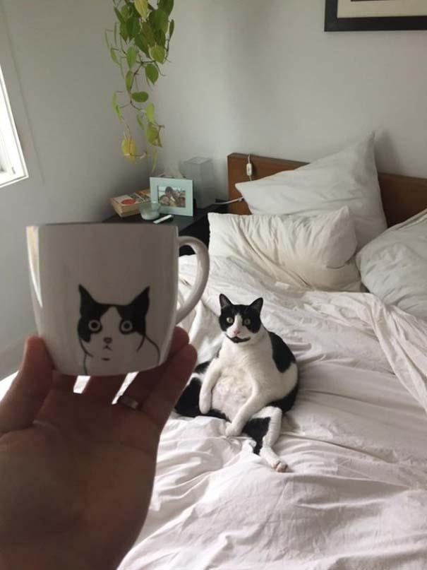 Γάτες που... κάνουν τα δικά τους! #74 (4)