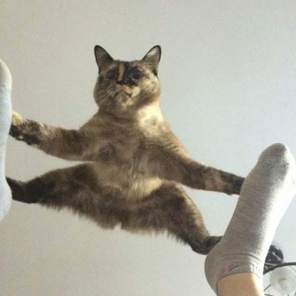 Γάτες που... κάνουν τα δικά τους! #73 (2)