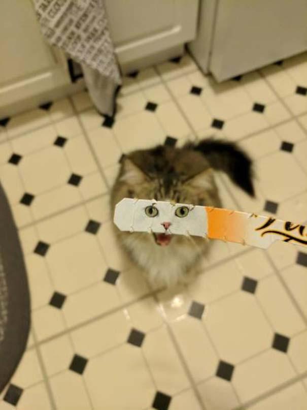 Γάτες που... κάνουν τα δικά τους! #73 (3)