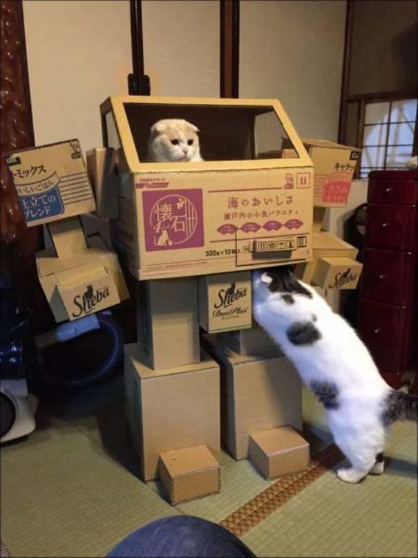 Γάτες που... κάνουν τα δικά τους! #73 (4)