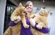 Γάτες που... κάνουν τα δικά τους! #73 (1)