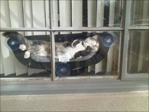 Γάτες που... κάνουν τα δικά τους! #73 (5)