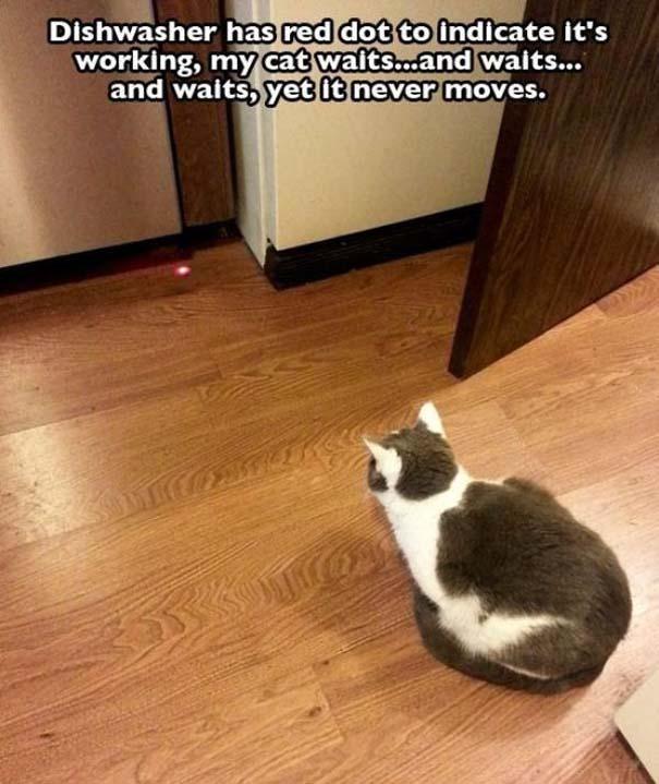 Γάτες που... κάνουν τα δικά τους! #73 (6)