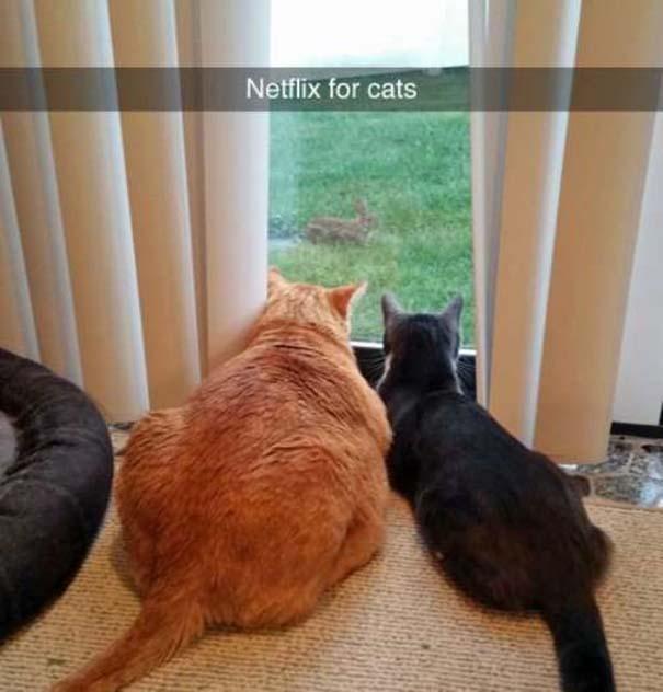 Γάτες που... κάνουν τα δικά τους! #73 (7)