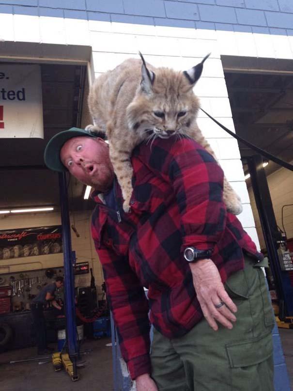 Γάτες που... κάνουν τα δικά τους! #73 (8)