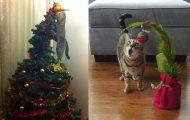 Γάτες και χριστουγεννιάτικα δέντρα... Μια ολέθρια σχέση!
