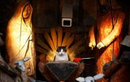 Γάτες που έκαναν κατάληψη στη φάτνη με ξεκαρδιστικό τρόπο (1)