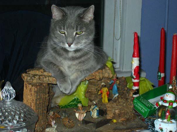 Γάτες που έκαναν κατάληψη στη φάτνη με ξεκαρδιστικό τρόπο (3)