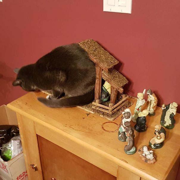 Γάτες που έκαναν κατάληψη στη φάτνη με ξεκαρδιστικό τρόπο (5)