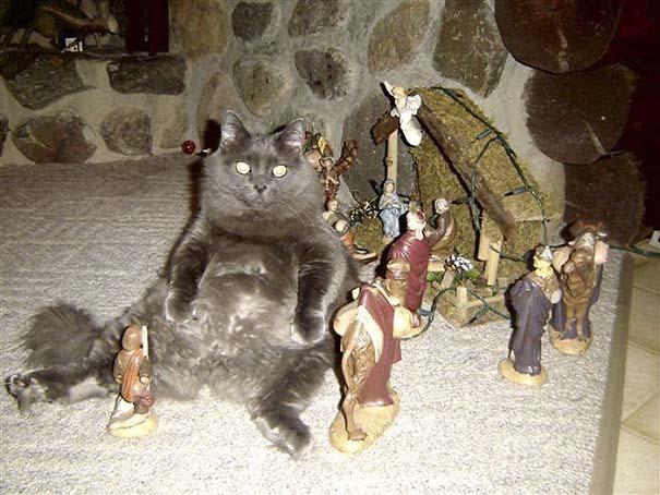 Γάτες που έκαναν κατάληψη στη φάτνη με ξεκαρδιστικό τρόπο (7)