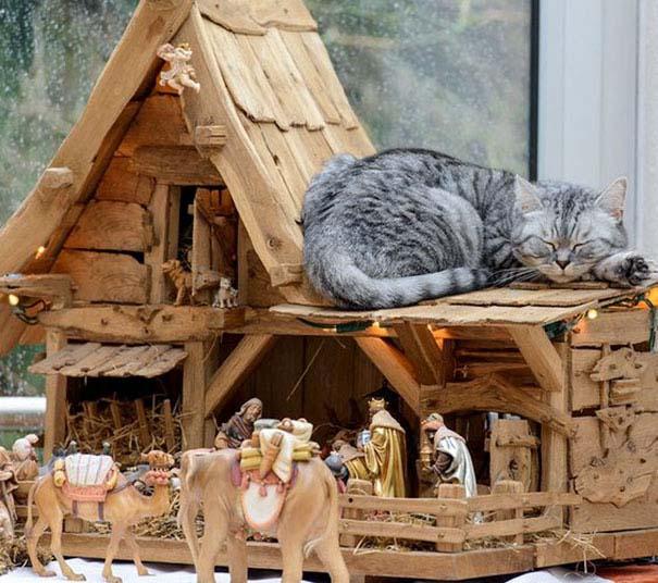 Γάτες που έκαναν κατάληψη στη φάτνη με ξεκαρδιστικό τρόπο (12)