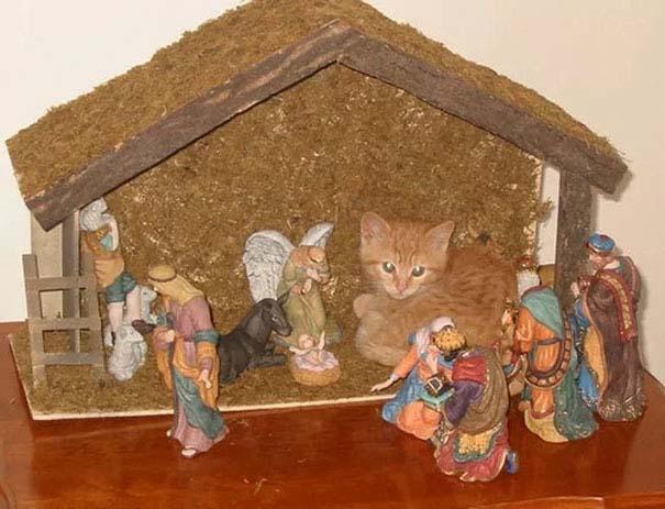 Γάτες που έκαναν κατάληψη στη φάτνη με ξεκαρδιστικό τρόπο (13)
