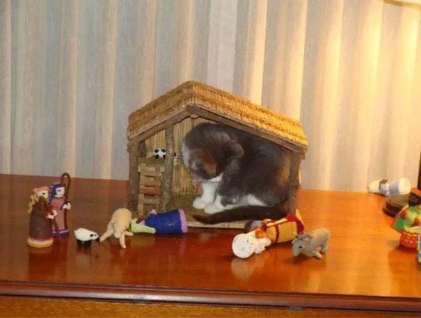 Γάτες που έκαναν κατάληψη στη φάτνη με ξεκαρδιστικό τρόπο (15)
