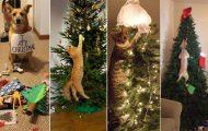 Κατοικίδια που προσπάθησαν να καταστρέψουν τα Χριστούγεννα