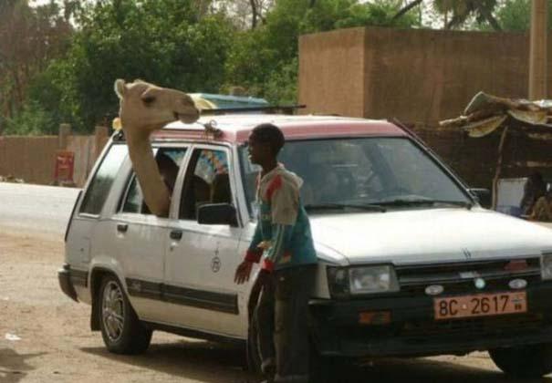 Μόνο στην Αφρική #9 (9)