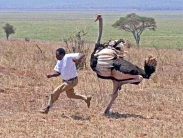 Μόνο στην Αφρική #9 (2)