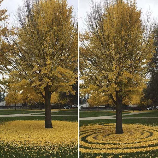 Καλλιτέχνιδα μετατρέπει πεσμένα φύλλα σε εκπληκτικά έργα τέχνης (5)