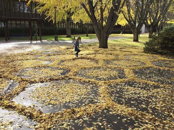 Καλλιτέχνιδα μετατρέπει πεσμένα φύλλα σε εκπληκτικά έργα τέχνης (10)