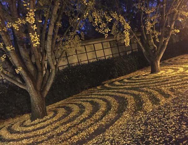 Καλλιτέχνιδα μετατρέπει πεσμένα φύλλα σε εκπληκτικά έργα τέχνης (14)
