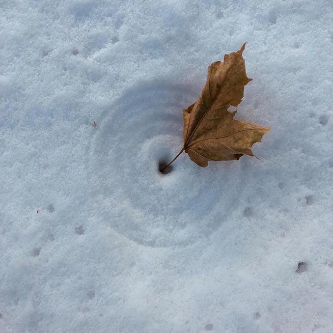 Αυτό το φύλλο δημιούργησε ομόκεντρους κύκλους καθώς το φυσούσε ο άνεμος | Φωτογραφία της ημέρας
