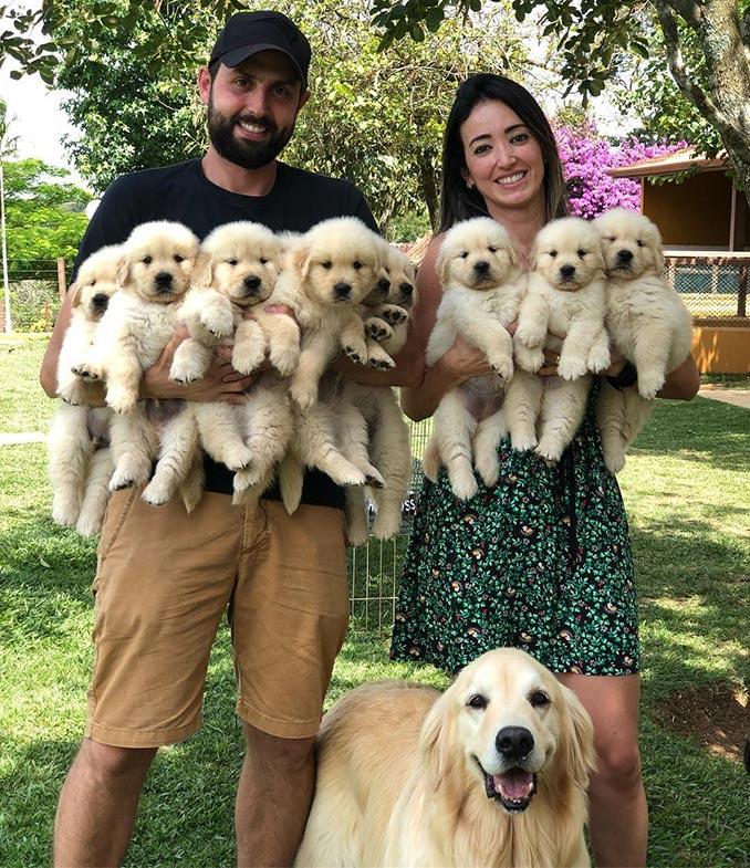 Μια ευτυχισμένη σκύλο-οικογένεια   Φωτογραφία της ημέρας