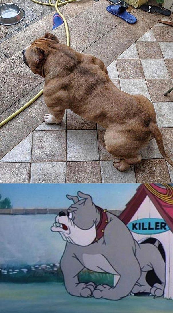 Όταν ο σκύλος σου θυμίζει τον Spike από το Tom & Jerry | Φωτογραφία της ημέρας