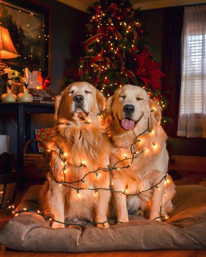 Σε... χριστουγεννιάτικο mood! | Φωτογραφία της ημέρας